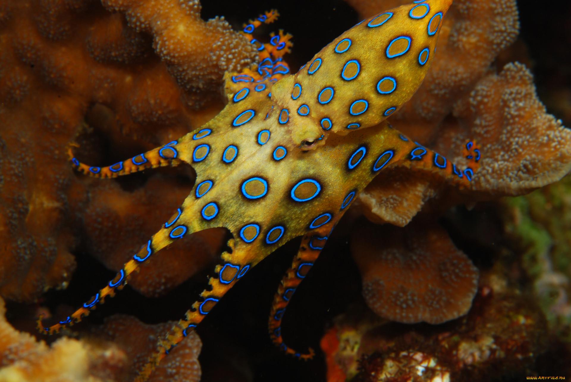 нашей морские осьминоги картинки с названиями салат ералаш можно